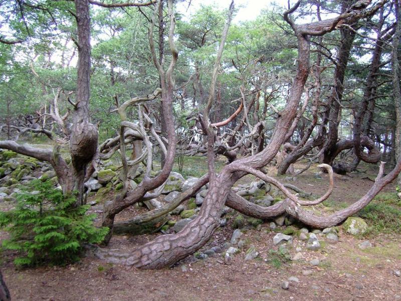 Restips: Trollskogen på Öland