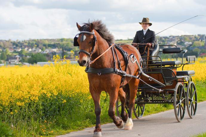 Hästfest på Tyresö slott