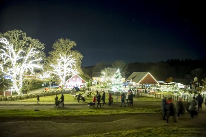 Hundratusen juleljus i Skånes Djurpark
