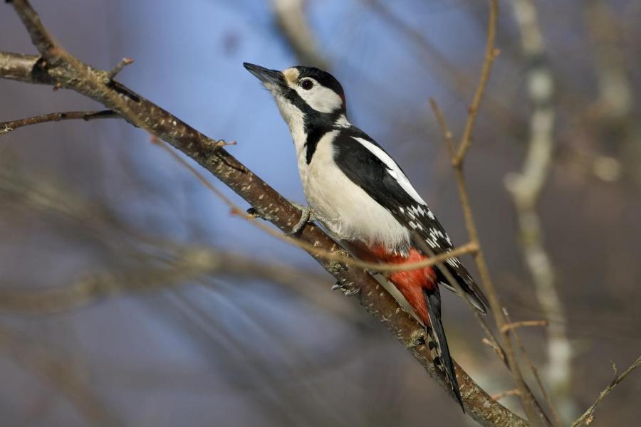 Räkna vinterfåglarna du matar för BirdLife