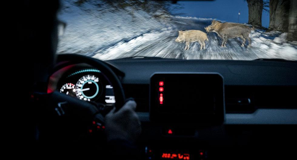 Förra året blev vildsvin det näst vanligaste djuret att krocka med. 2017 blev ett rekordår för viltolyckor. Aldrig tidigare har det rapporterats in så många incidenter.