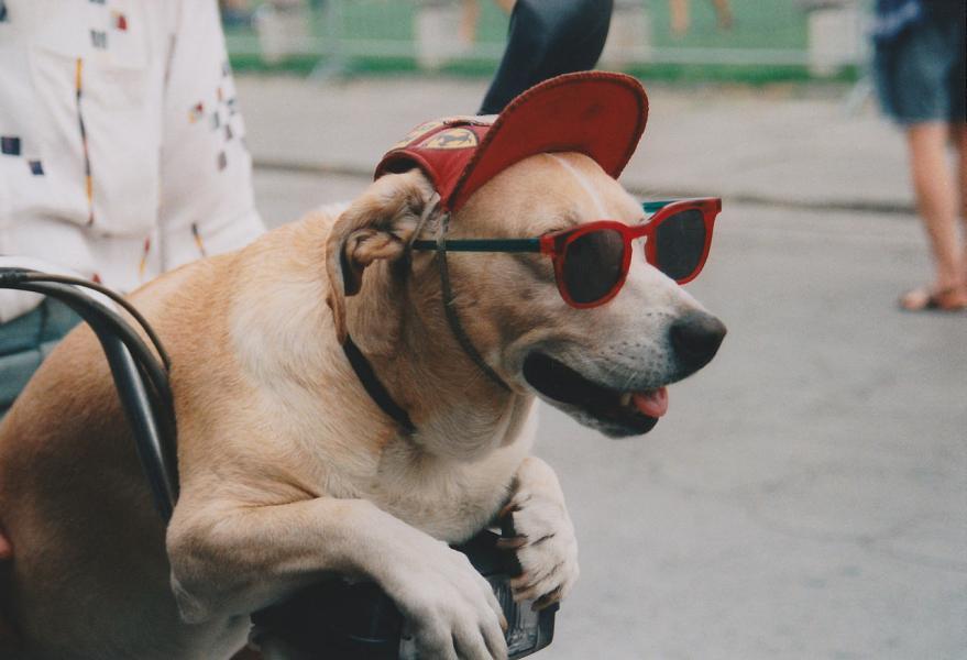 Fyra av fem tar med sig hunden på semestern