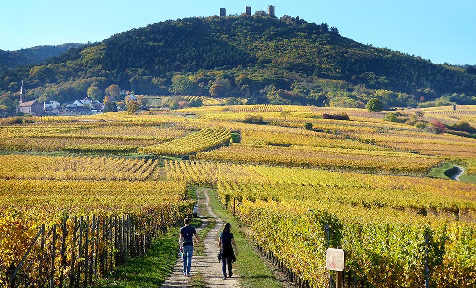 Vinfälten sträcker sig upp mot bergen där det tycks ligga en gammal borg på varje topp. Det finns många vandringsleder och det är oftast inte långt till nästa by.