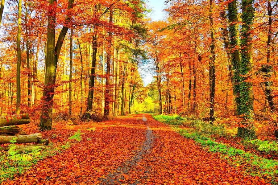 Den krispiga färgstarka hösten är här