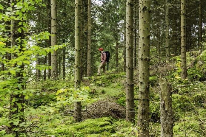 Skåneleden firar 40 år med delikatesser och skogsbad