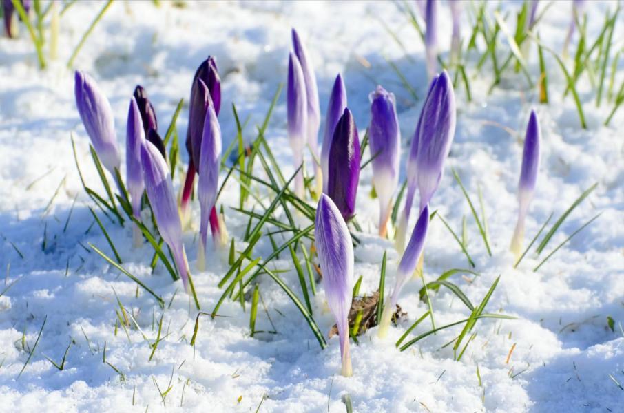 Längtan efter våren