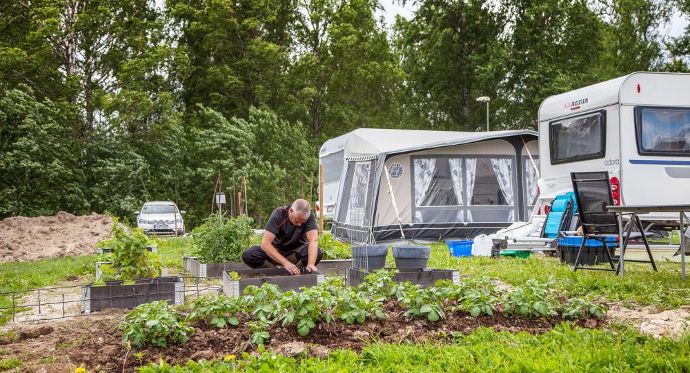 Här odlar campinggästerna egna grödor
