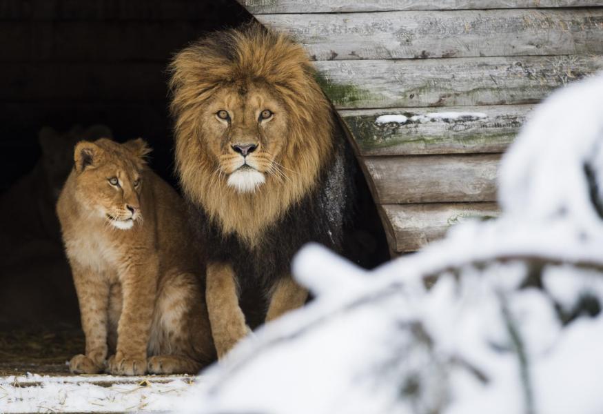 Vilken djurpark är bäst?
