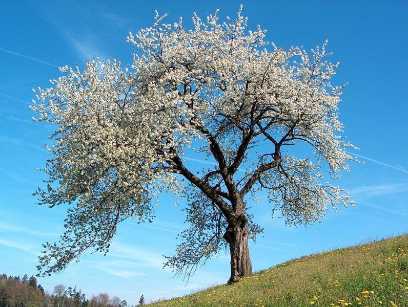 Idag känns våren extra närvarande
