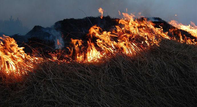 Ta det försiktigt vid grillningen i påsk
