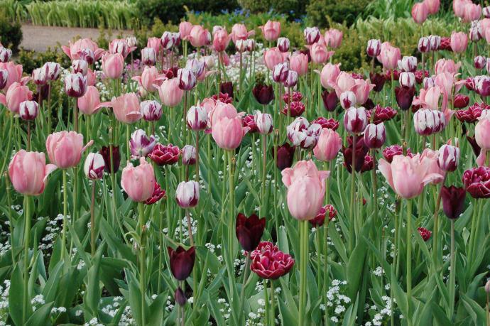 Vårfest på Sofiero
