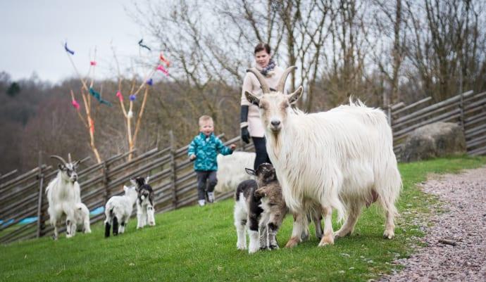 Skånes Djurpark öppnar för säsongen