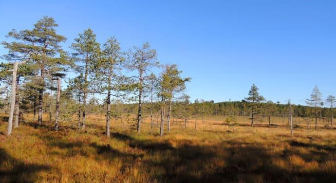 Dalarna har fått tre nya naturreservat
