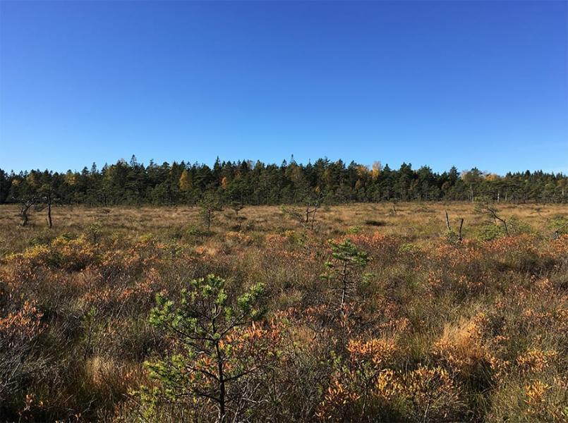 Nytt naturreservat i Dalsland