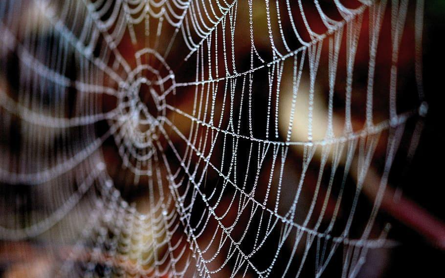 Elektronik skrämmer bort spindlar