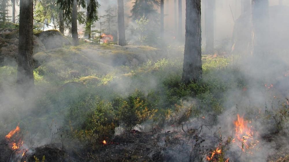 Varmt och torrt väder ökar risken för skogsbrand