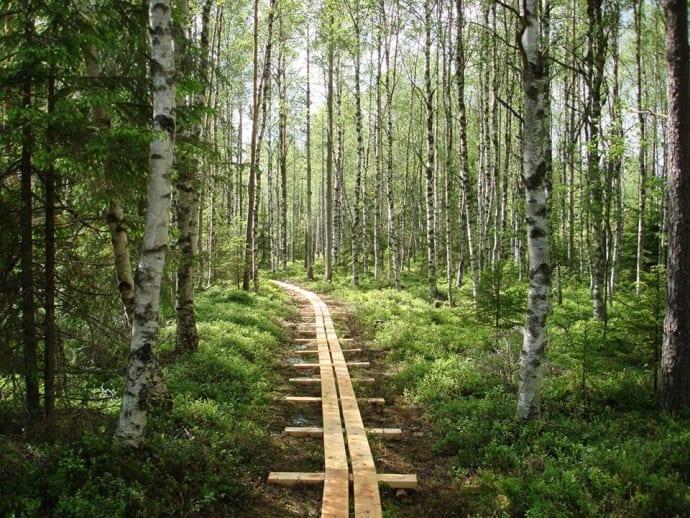 Missa inte Sveriges vackraste omvägar