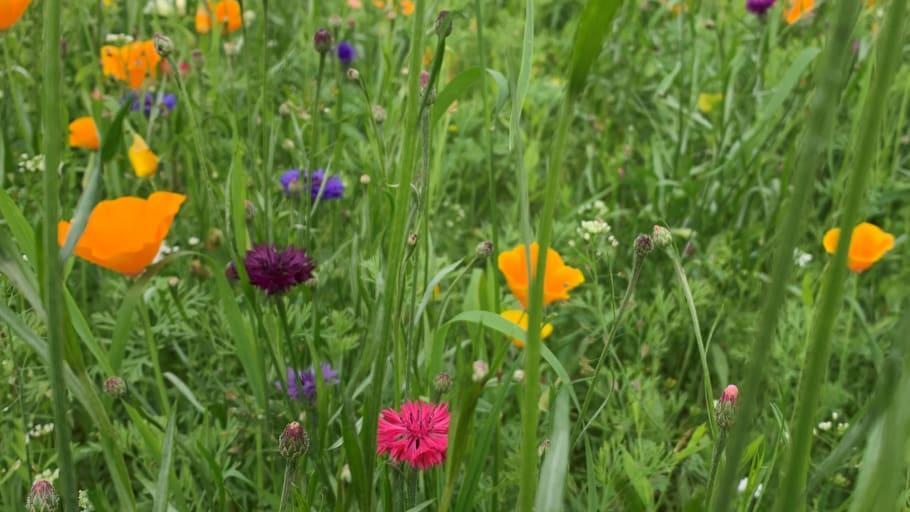Blomsterprakt längs nordliga vägar i sommar