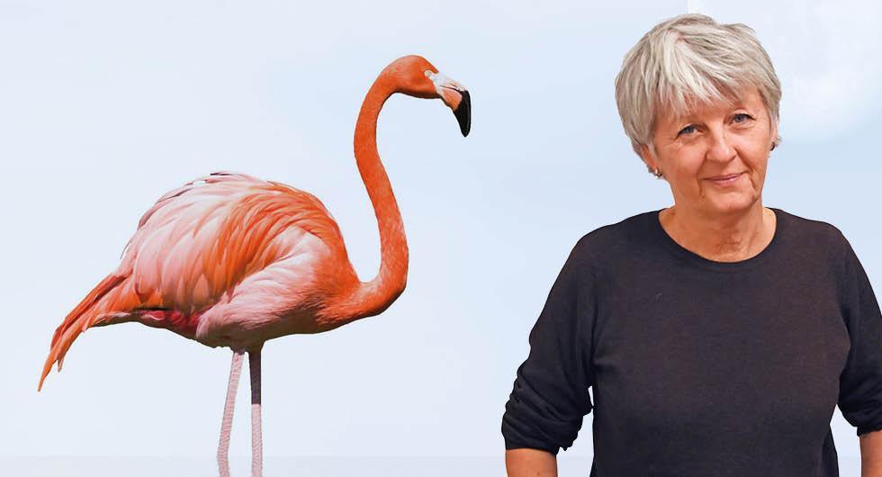 Har du koll på vad rosa flamingon betyder i husbilen?