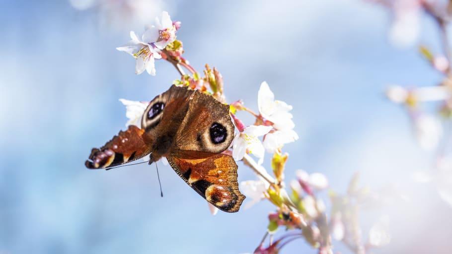 Utställningen SURR! landar på Kiviks musteri under Pollineringsveckan