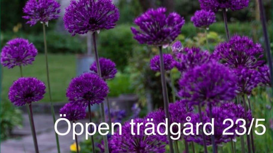 Trädgårdsentusiaster öppnar sina trädgårdar