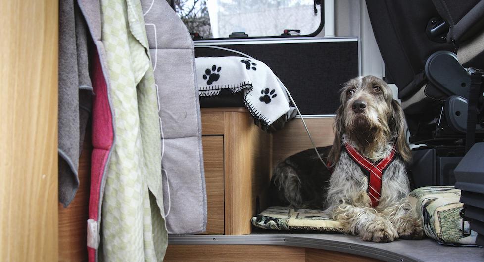 Hund i husbil på semestern: Detta ska du tänka på