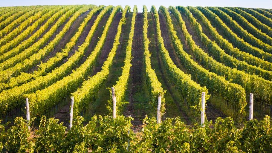 Skåne ska bli en vinregion, ett skånskt Napa Valley
