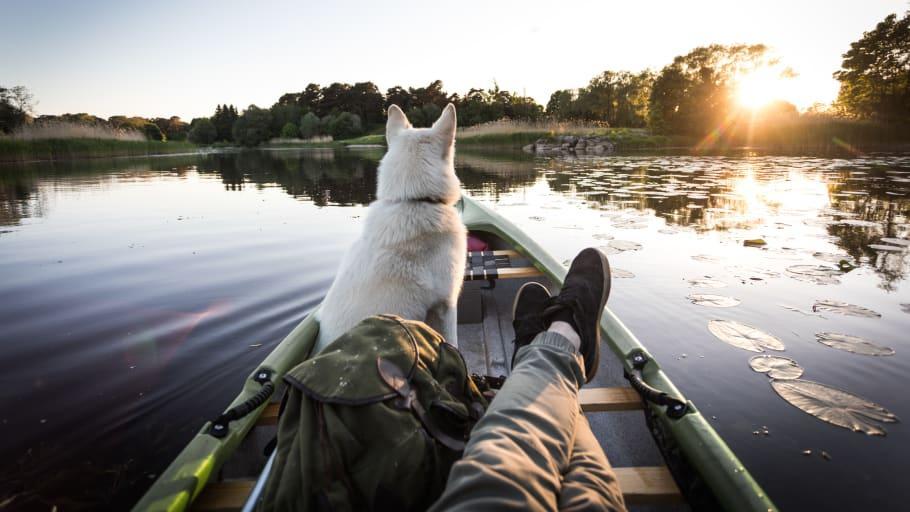 Svenska hundar avgör hur vi semestrar