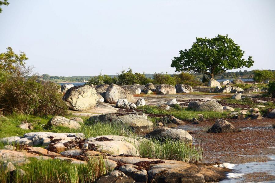 Fricamping i naturreservat begränsas