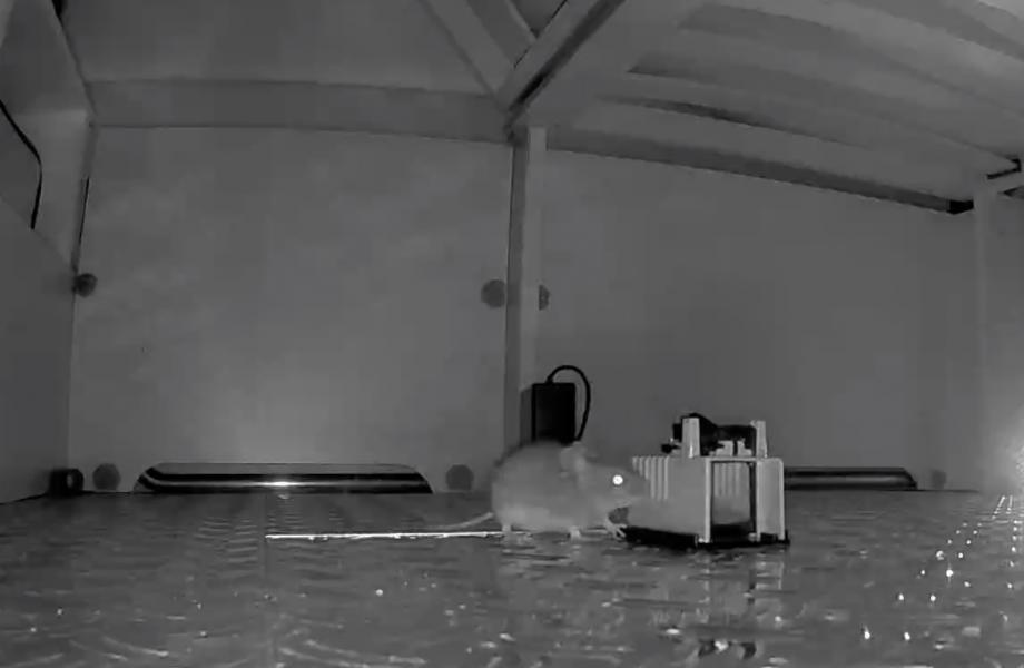 En övervakningskamera plus en elektrisk musskrämma och en musfälla i husbilen. Se filmen längre ned i artikeln. Filmat av Robin Skogward på Autohallen Husbilar i hans privata husbil.