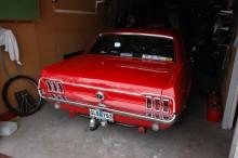 Mustangen är gott skick, säljs genom KVD.