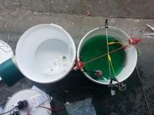 Så häller man i nickelsaltet i drygt fem liter vatten, och det blir en hälsosam grön kulör.