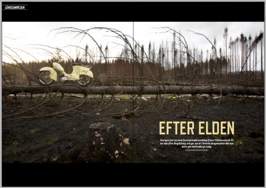Skogslandskapet i Västmanland går inte längre att känna igen. Efter den stora skogsbranden är det förkolnat, svart och magiskt.