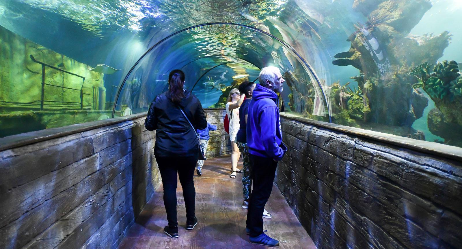 Många tar chansen att få komma nära akvariets rockor och hajar.