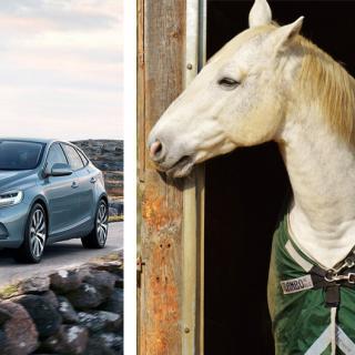 Frågeställaren undrar om Volvo V40 duger till att dra hästsläp.