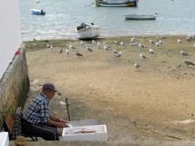 I väntan på fiskrens. Vid hamnen i Alvor landas mycket fisk, inte minst sardiner.