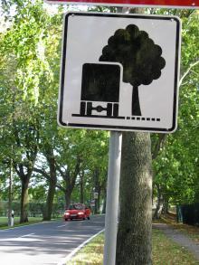 Se upp för närgångna träd på Rügens smala och lummiga vägar!