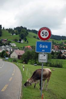 Radarkontroller och kossor, ingen ovanlig syn längs de mest trafikerade alpvägarna.