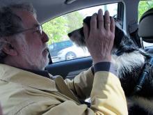 """Den som har tur kan få sällskap i baksätet av en """"taxihund""""."""