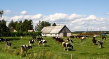 Småskaliga jordbruk som vi minns dem från förr finns fortfarande på Estlands landsbygd.