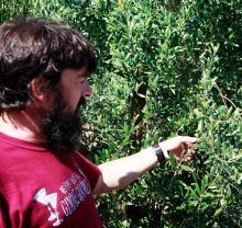 Ägaren Pep Solivella på olivgården Oli Solivella berättar om processen som går från oliv till olivolja.
