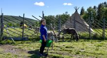Karen-Ann Hurri sköter om samevistets sällskapliga renar.