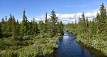 I Jukkasjärvis skogar finns fina vattendrag och rastplatser. Kanske gömmer sig middagsfisken här.