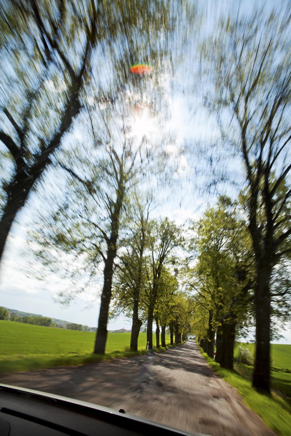 Vackra, men farliga, alléer kantar ofta landsvägarna i Polen. Träden kräver många offer men får ändå stå kvar.