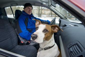 Hund i bil här är alla knepen | Vi Bilägare