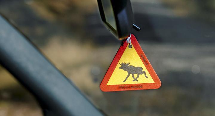 Stor risk att krocka med djur