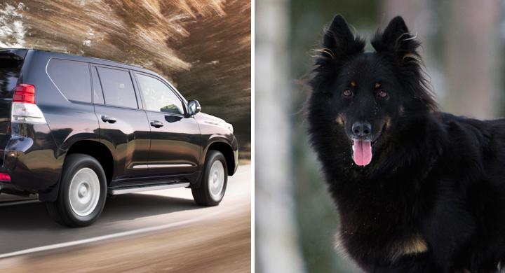 Hund större miljöbov än bil