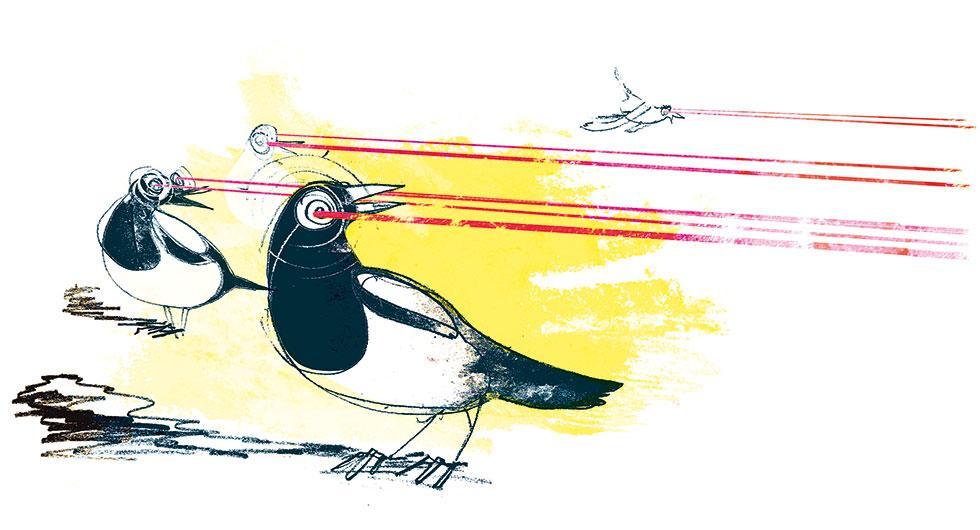 Frågeställaren undrar om moderna bilars utrustning med laser och radar kan förvirra fåglar. Illustration: Johan Isaksson.